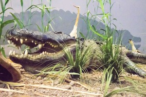 "The Museum of the Gulf Coast in Port Arthur is asking children ages 5 to 15 to ""Name the Alligator"" during a contest scheduled to begin in conjunction with its ""Ragin' Reptiles"" Family Fun Day on Saturday."
